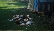 Aç kalan sokak köpekleri tavukları telef etti
